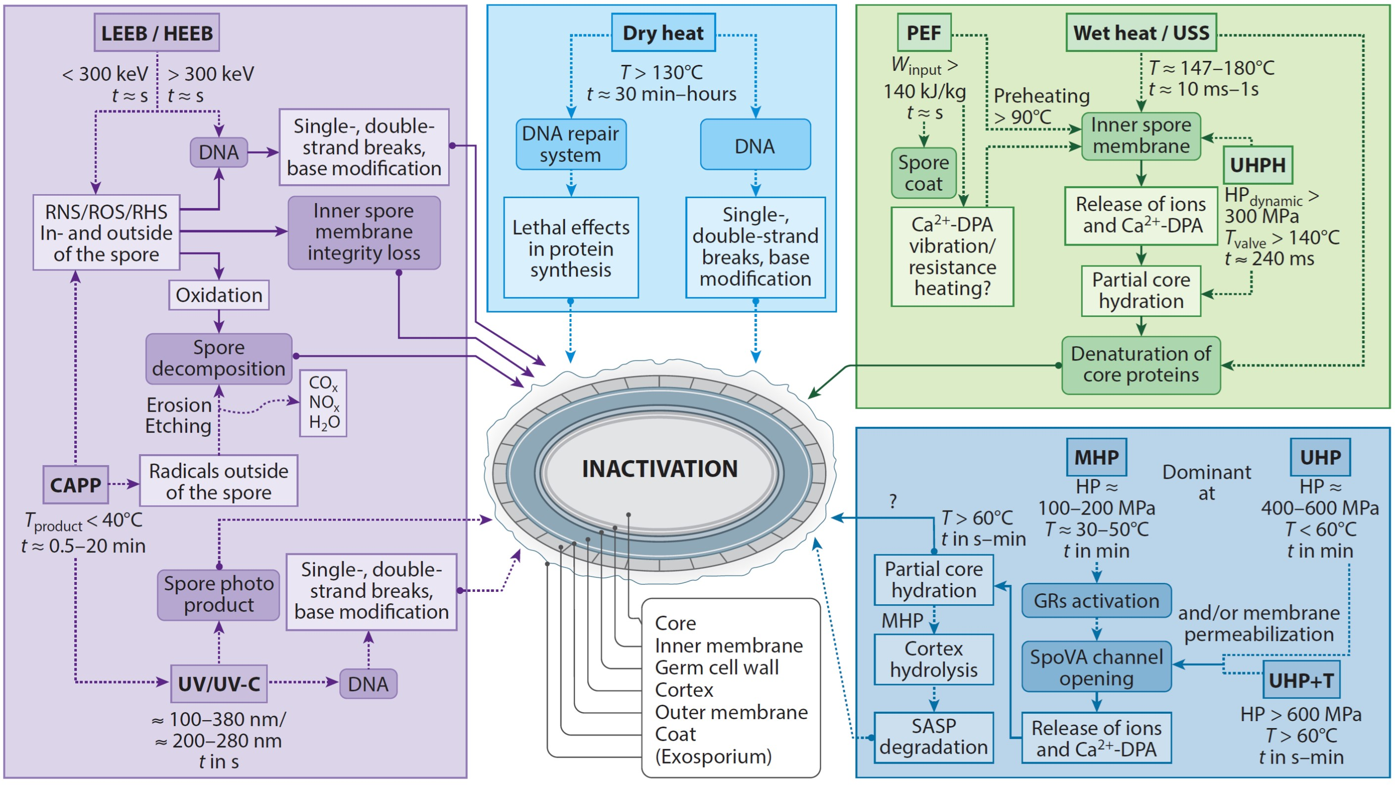 Bacterial Spore Mechanisms Sustainable Food Processing Eth Zurich Germination Diagram It Works From Schematic Overview Of